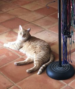 cat and patchcords