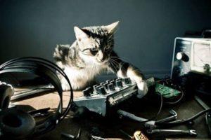 Cat and Moog Minitaur