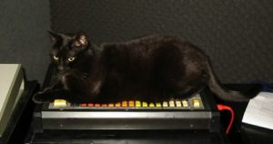 Black Cat and Roland TR-808