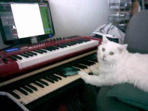 Maximus in the studio