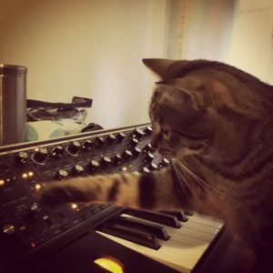 Cat Playing moog subsequent 37