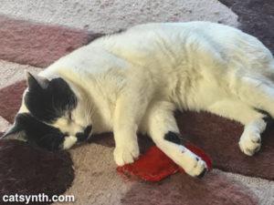 Sam Sam and red sock