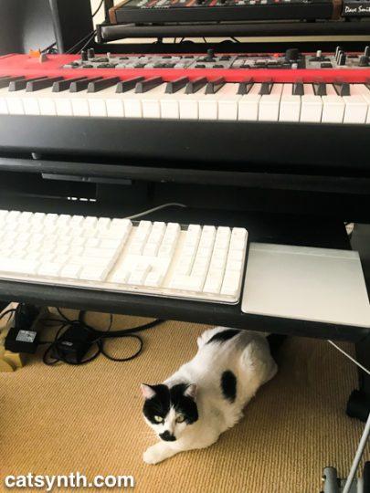 Sam Sam in the studio