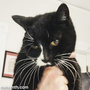 Flicka from House of Dreams cat shelter