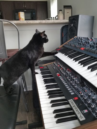 Black Cat, Prophet 6, OB6