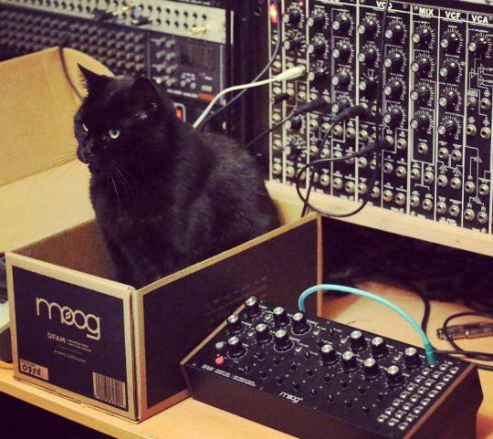Marcel (black cat) in box next to Moog DFAM