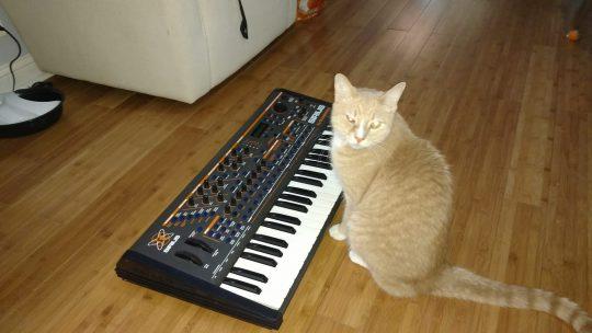 Cat with Quasimidi Sirius sytnhesizer.