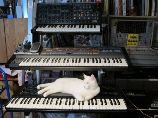 White cat with a Crumar Bit 99, Roland Juno 106, Korg MS-20, and modules from Doepfer, Metasonix, and more.