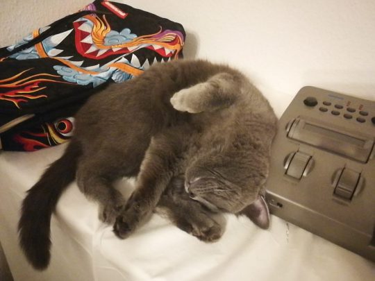Milali sleeping against a Korg Prophecy