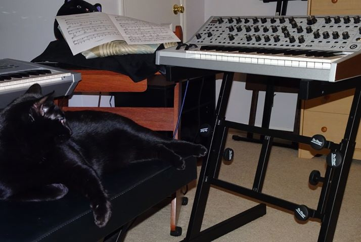 Leo the black cat and Moog Subsequent 37 CV