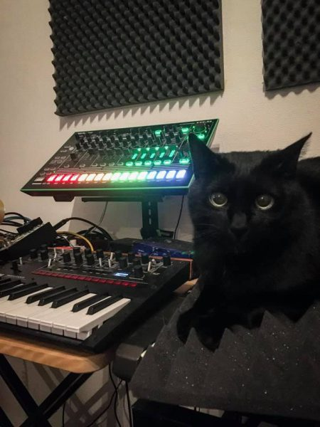Black cat with Roland TR-8 and Korg Monologue