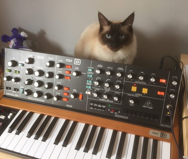Monty (siamese cat) with Behringer Poly D synthesizer