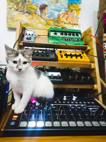 Cat, Arturia DrumBrute, Waldorf Blofeld, Sequential Tetra and Mopho