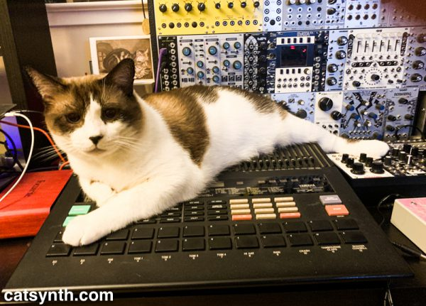 Big Merp the cat sitting on a Yamaha RX5 drum machine