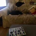 CatSynth Pic: Cats and Buchla