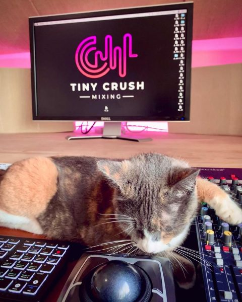 Cat laying on mixing console.