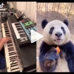 PandaSynth video: Moog Grandmother and Fender Rhodes