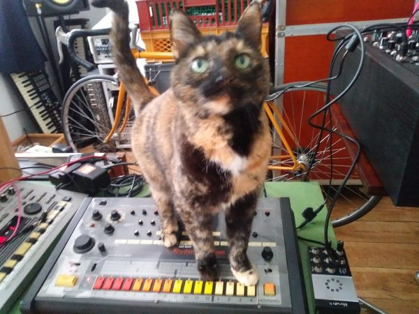 Primus the cat sits on top of a Roland TR-808 drum machine.