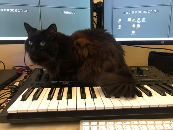 Mae the black cat sits atop a Korg OpSix synthesizer.  Computer keyboard and screen also present.