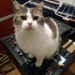 CatSynth Pic: Emily and Modular