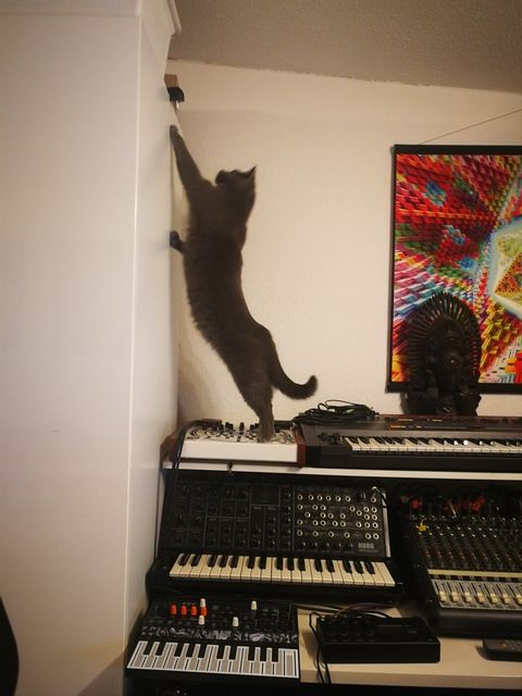 Milali the cat reach a top shelf while stepping on a Future Retro Revolution.  Also present: Arturia MicroFreak and Korg MS-20.