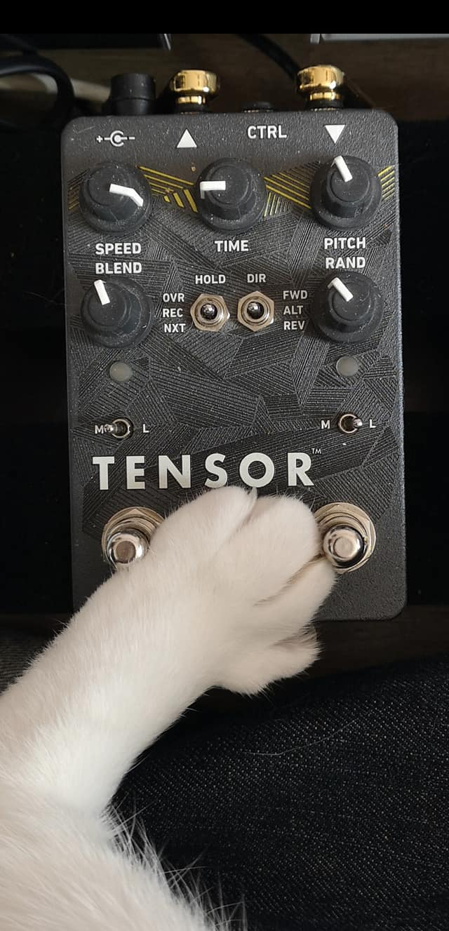 Cat paw on Red Panda Tensor pedal.