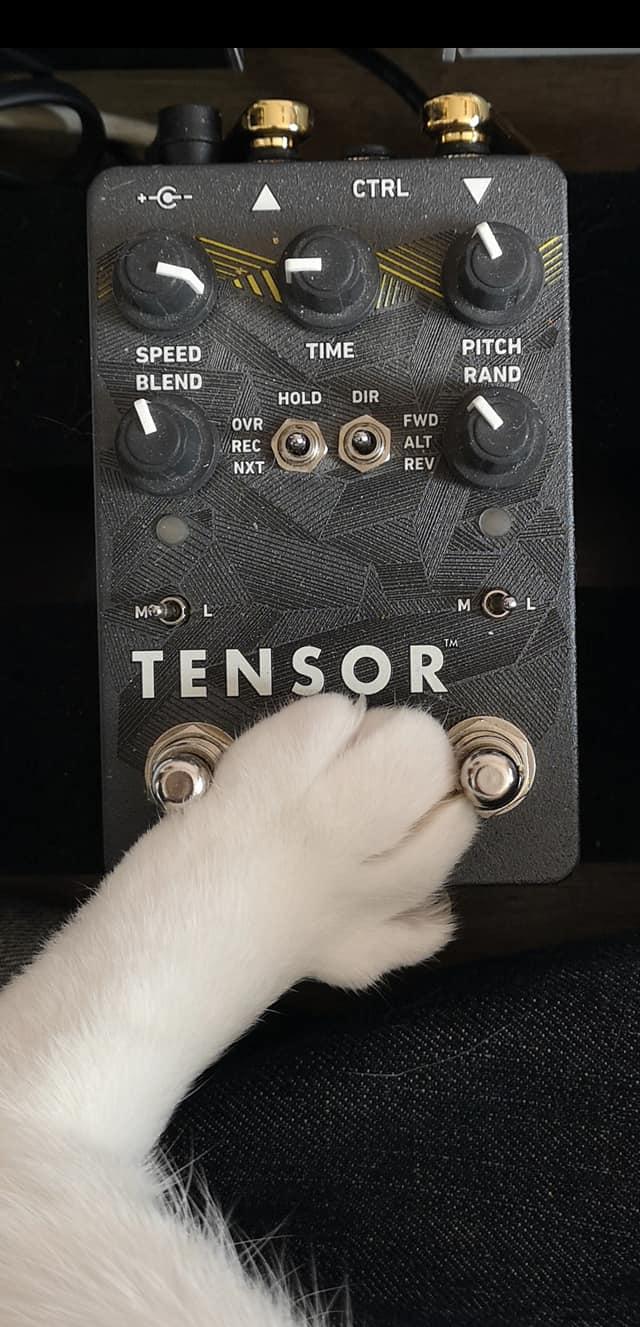 Cat paw on Red Panda Tensor pedal.