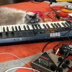 Korg Poly 800 and Electro-Harmonix Deluxe Memory Man