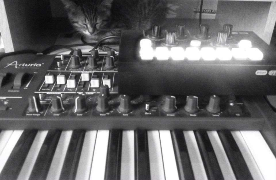 Tweek the kitten sits behind an Arturia MinIBrute synthesizer and OTO Biscuit 8-bit effects processor.