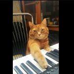 Cat Pianist