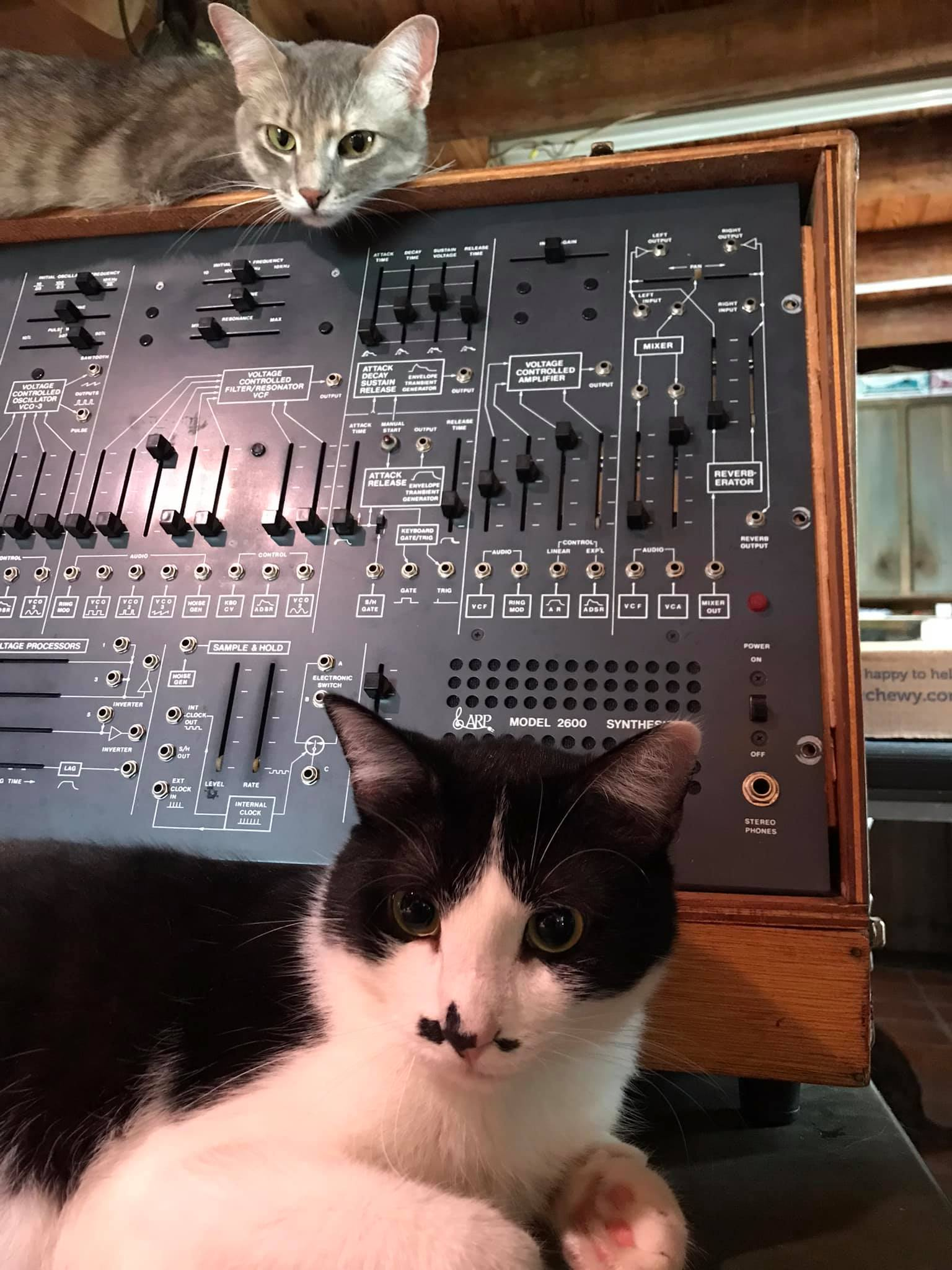 Two cats, Ansel (tuxedo) and Olive (gray) with an ARP 2600 synthesizer