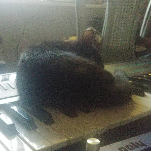 Tuna the black cat naps on a Korg Poly-800 synthesizer.