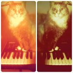 CatSynth Pic: Cat and Akai in stereo