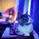 CatSynth Pic: Novation Summit (Tiny Crush Mixing)