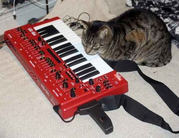 Cat with red Behringer MS-101 synthesizer