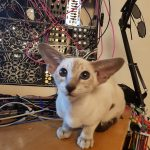 Xandra with FolkTek, Moog and other modules