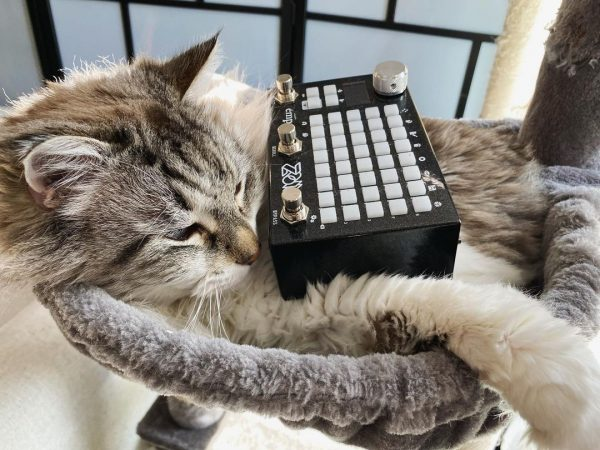 Princess Leia (cat) with Empress Effects Zoia modular effects pedal