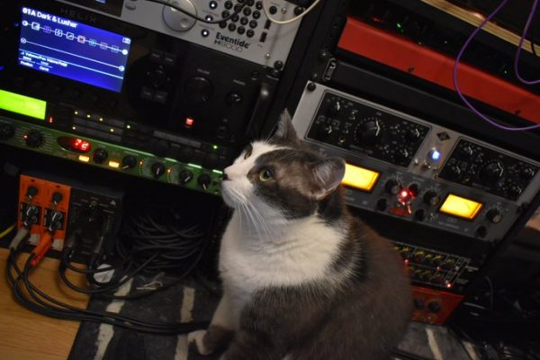 Orion the cat in front of an Eventide H9000, Universal Audio boxes, and more audio processing gear.
