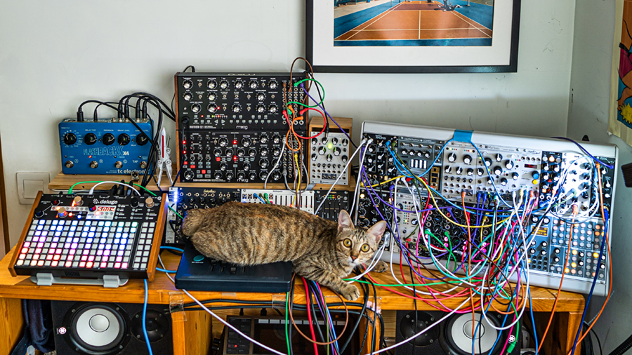 Meemee the cat with a Synthstrom Audible Deluge, a Moog Mother-32 and Subharmonicon, and a variety of Eurorack synthesizer modules.