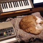 Cleo with Korg Rhythm 55, Roland SH-101, Arturia